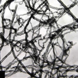 Graphitized Multi Walled Carbon Nanotubes